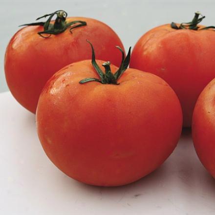 Tomato, Burpee's Big Boy