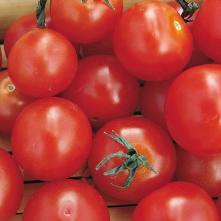 Tomato, Early Salad Hybrid