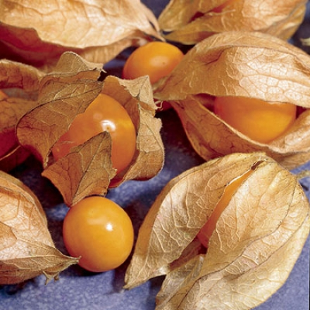 Tomato, Ground Cherry