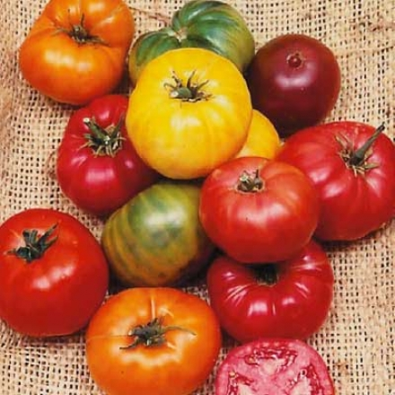 Tomato, Heirloom Rainbow Mingle