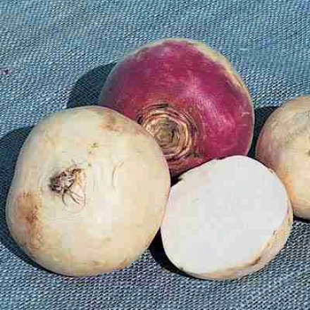 Turnip, Purple Top White Globe