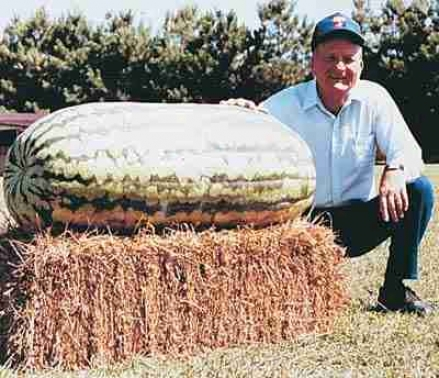 Watermelon, Carolina Cross