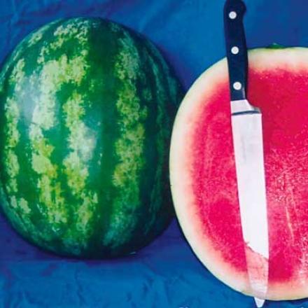 Watermelon, Sweet Slice Plus