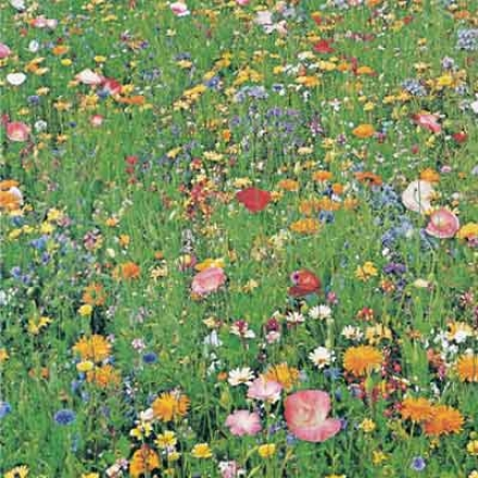 Wildflowers, Riot Of Color