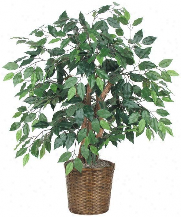 """36""""h Capensia Bush - 36""""hx32""""d, Green"""