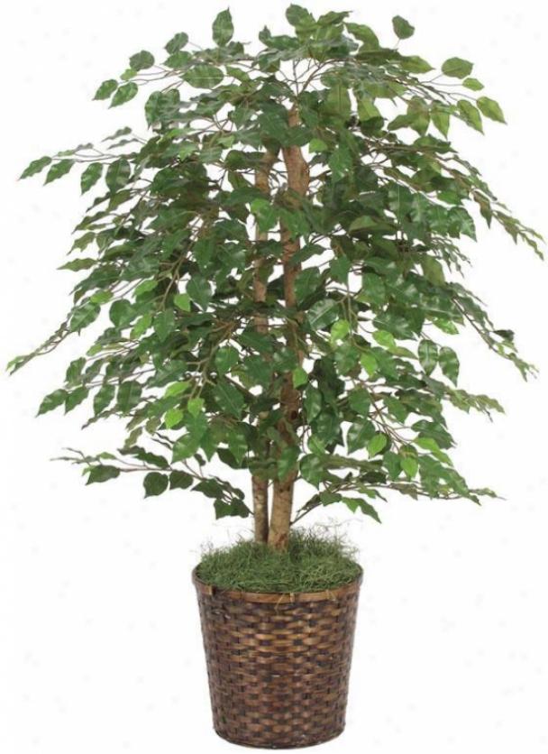 """48""""h Ficus Bush - 48""""hx36""""d, Green"""
