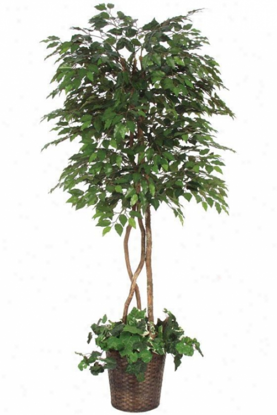 """78""""h Ficus Tree Underplanted - 78""""hx36""""d, Green"""