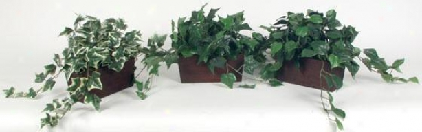 Of various sorts Foliage In Wooden Planters - Set Of 3 - Set Of 3, Green