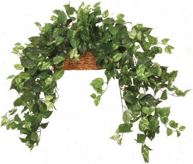 """botanica Long Trail Pothos Ledge Basket - 18""""hx24""""w, Green"""