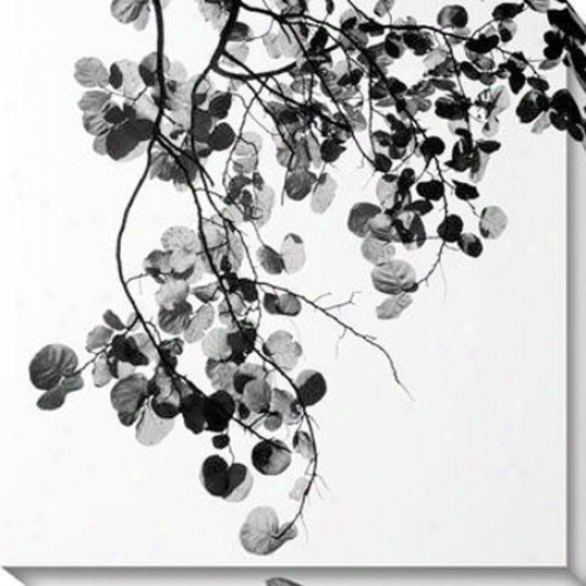 """bougainvillea Canvas Wall Art - 40""""hx40""""w, Black"""