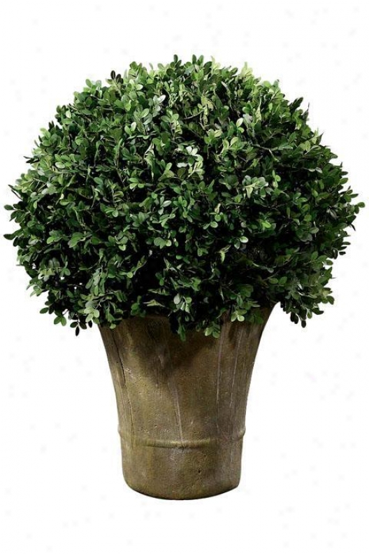 """boxwood Foliage Topiary With Round Ceramic-like Base - Single 20""""h, Rnd Ceramic-lk"""