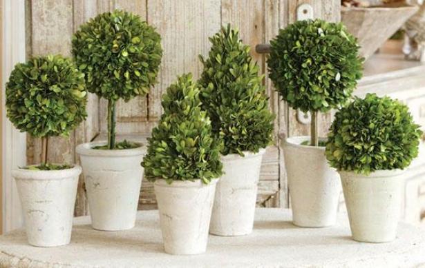 Boxwood Ornamental - Set Of 6 - Set Of 6 Assrtd, Green
