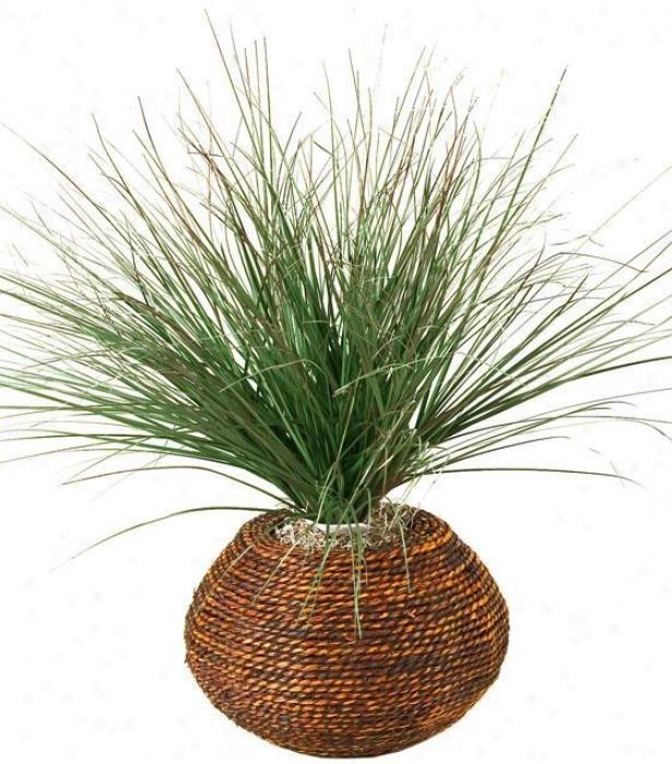 """""""burgundy Onion Grass In Round Braided Rope Planter - 16""""""""hx16""""""""w, Green"""""""