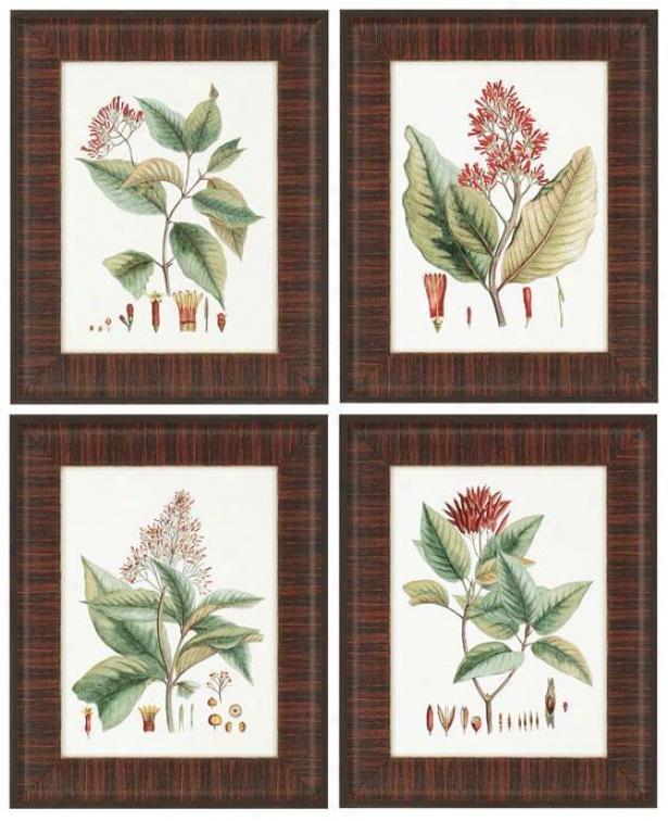 """""""crimson Botanical Wall Art - Set Of 4 - 21""""""""hx17""""""""w, Red"""""""