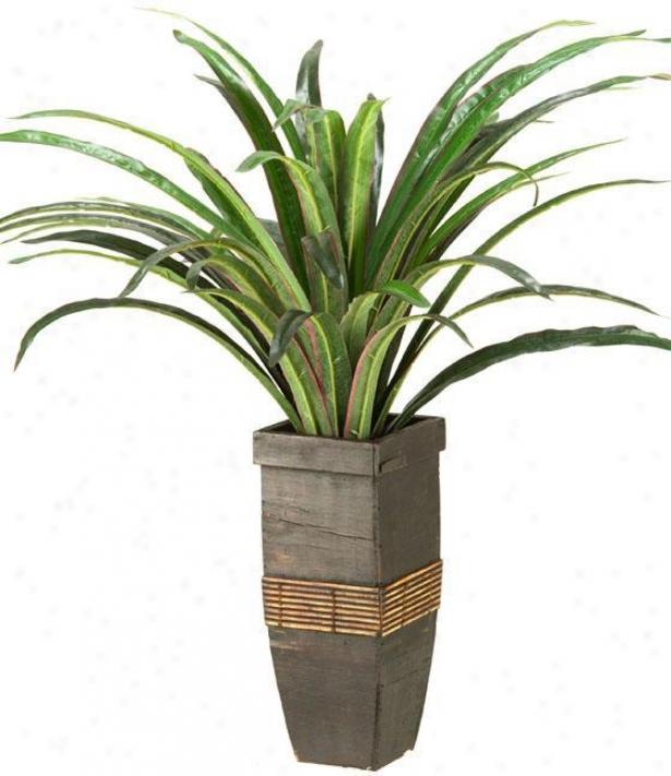"""""""dracaean In Square Wooden Planter - 24""""""""hx20""""""""w, Green"""""""