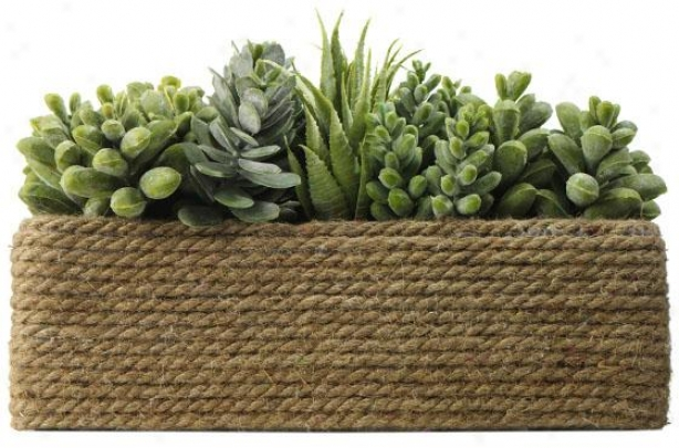 """echeveria/cacti In Rope Basket - 7h X11w X6""""w, Green"""
