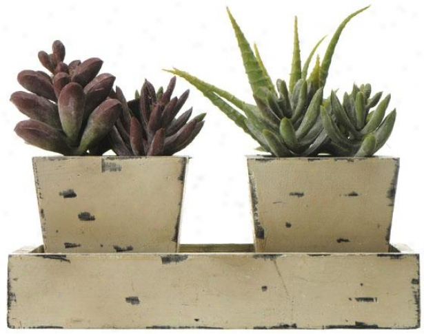 """echeveria/filicauline/cacti In Wooden Box - 6h X8w X4""""d, Green"""