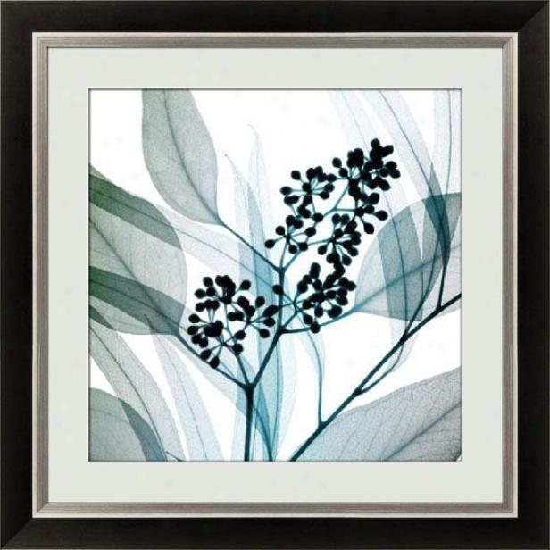 """eucalyptus Framed Walk Art - 30.5""""hx30.5""""w, Bk W/slv Lip Fm"""