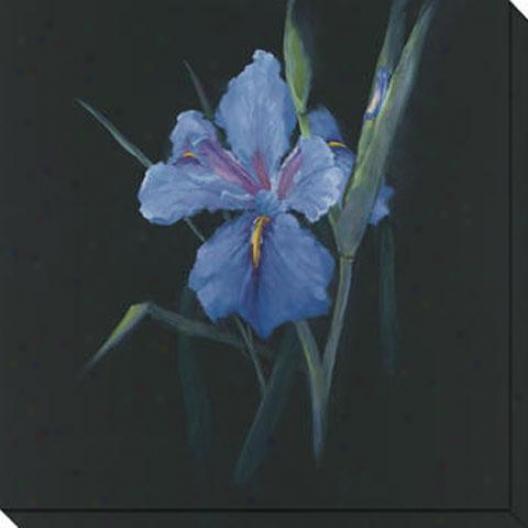 Floral Suite Ii Canvas Wall Art - Ii, Black