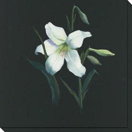 Floral Suite Iii Canvas Wall Art - Iii, Black