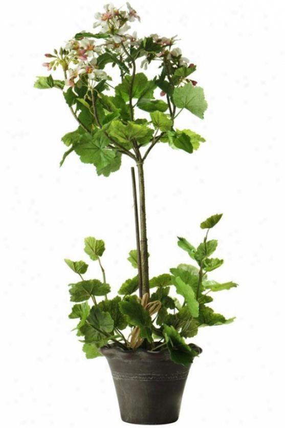 """""""geranium Topiary - 27h X7""""""""diam, Stab"""""""