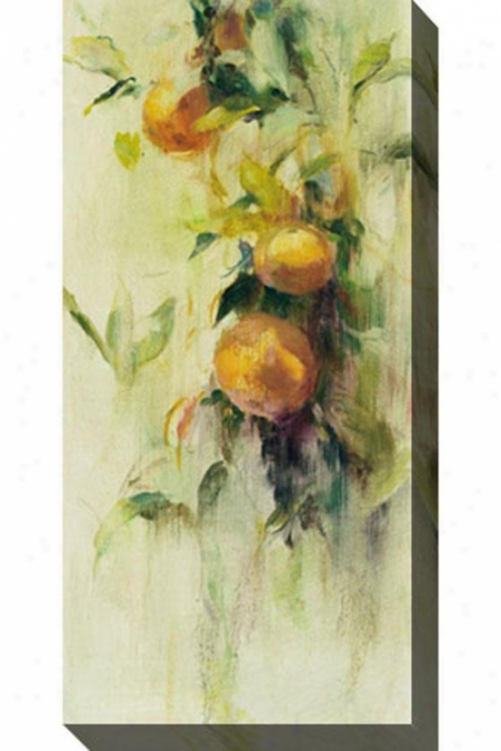 Golden Fruit Study Iii Canvas Wall Art - Iii, White