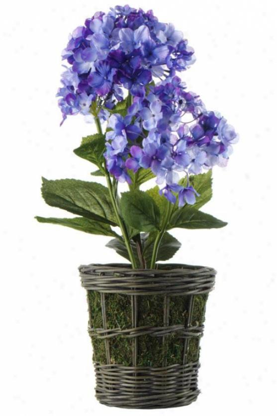 """mini Hydrangea In Rattan Basket - 19""""h, Purple"""