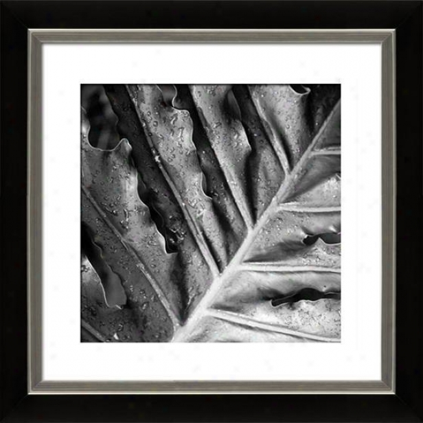 """morning Dew Framed Wall Art - 29""""hx29""""w, Mttd Blck/slvr"""