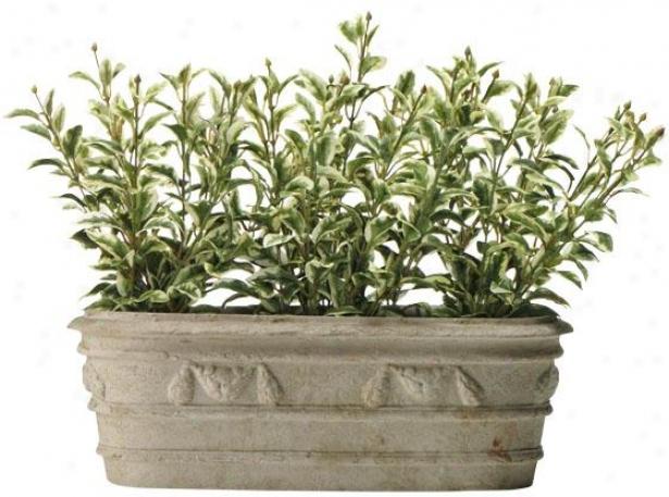 """oregano Plant Variety - 12h X12.5w X5""""d, Green"""