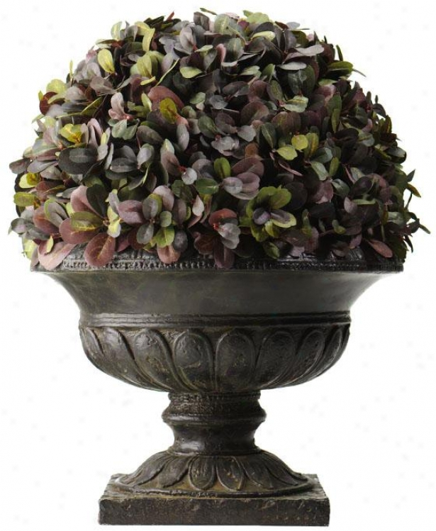 """pastel Boxwood Variety - Ball-shaped: 16h X 15""""roundx, Purple"""