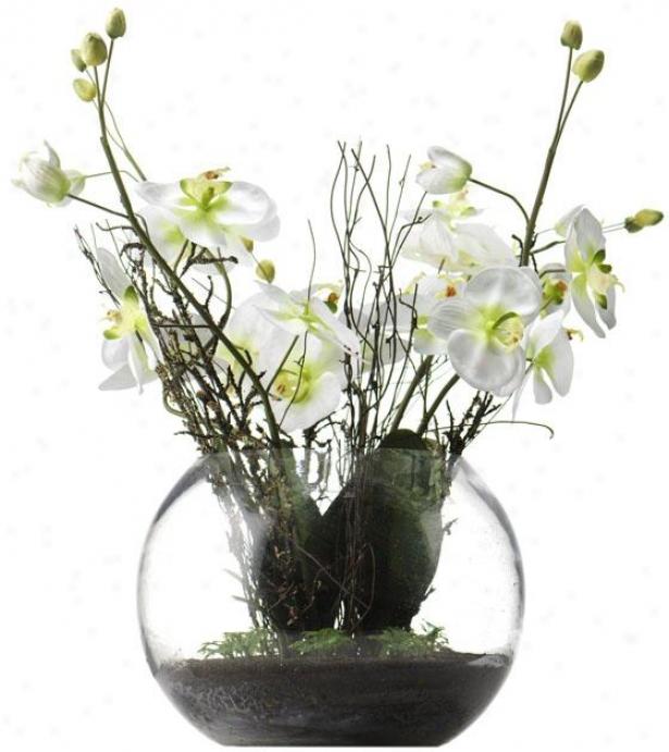 """phalaenopsis In Glass - 27h X 12""""round, White"""