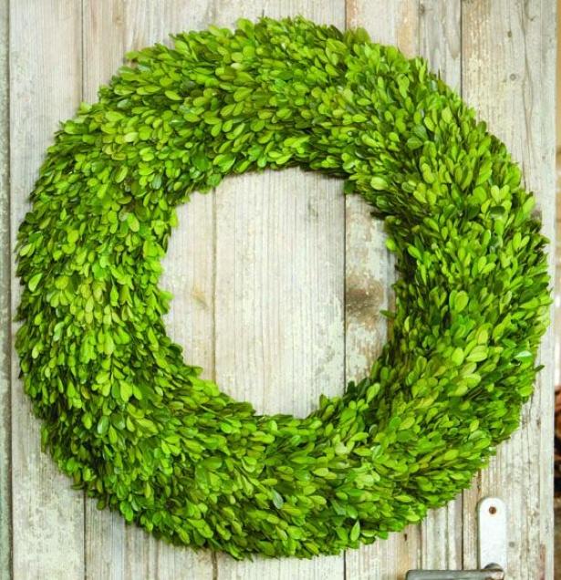"""preserved Boxwood Wreaths - 24"""" Diameter, Green"""