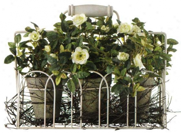 Roses In Flesh Pot And Iron Basket - Set Of 3 - 3 Piece Set, Green