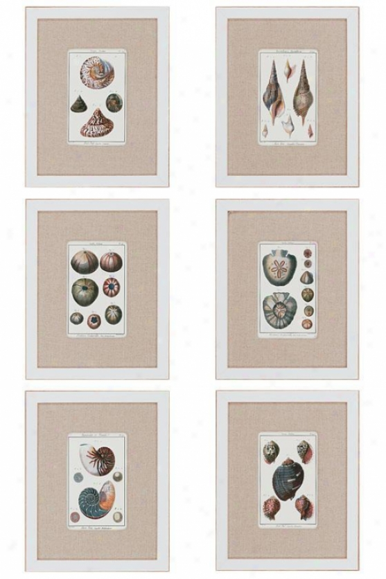 Sea Shells Wall Art - Place Of 6 - Set Of 6, White