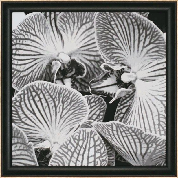 """striped Orchid Wall Art - 35""""squarex2""""d, Black And White"""