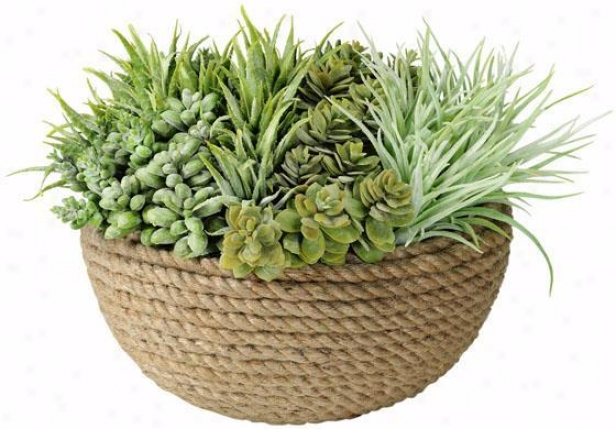 """""""succulents In Coiled RopeP ot - 12""""""""h, Green"""""""