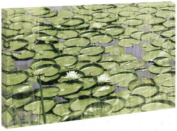 Water Lilies Wall Trade - 36hx54wx1.5d, Green